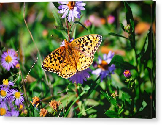 Teton Butterfly Canvas Print