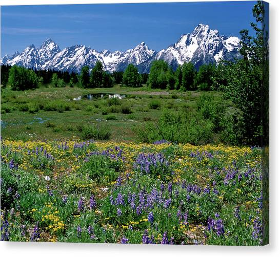 Teton Grandeur Canvas Print