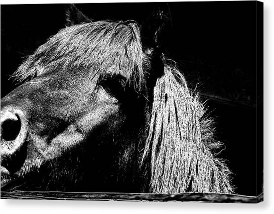 Teton Horse Canvas Print