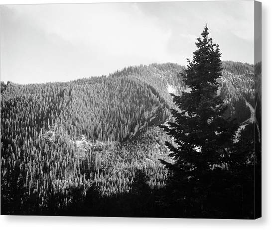 Teton National Forest Canvas Print - Teton National Forest, 1936 by Granger