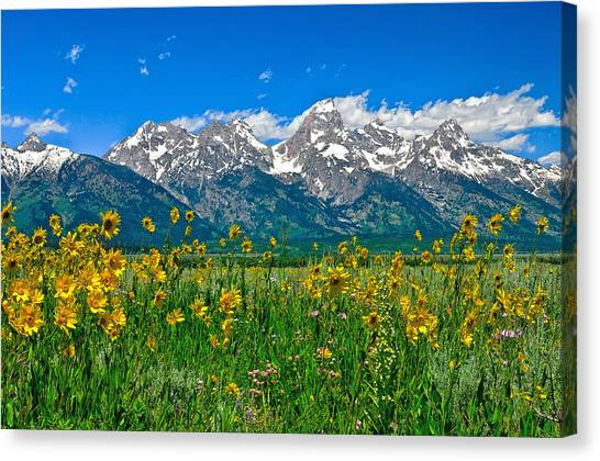 Canvas Print featuring the photograph Teton Peaks And Flowers by Greg Norrell