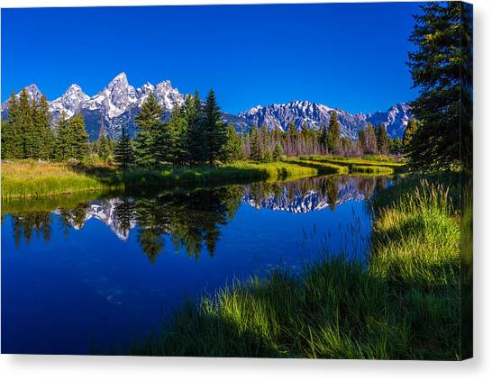 Pine Trees Canvas Print - Teton Reflection by Chad Dutson