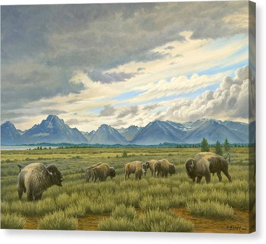 Wyoming Canvas Print - Tetons-buffalo  by Paul Krapf