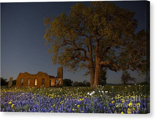 Texas Blue Bonnets At Night Canvas Print