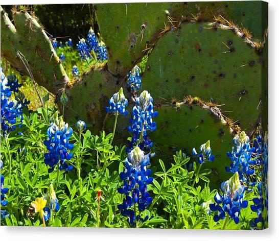Texas Blue Bonnets Canvas Print by Mark Weaver