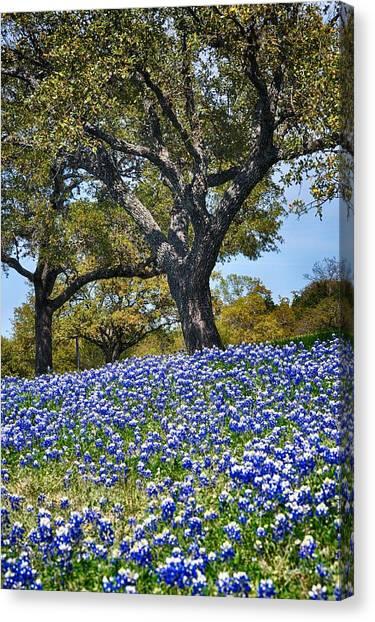 Texas Bluebonnet Hill Canvas Print