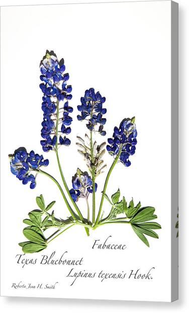 Texas Bluebonnet Canvas Print
