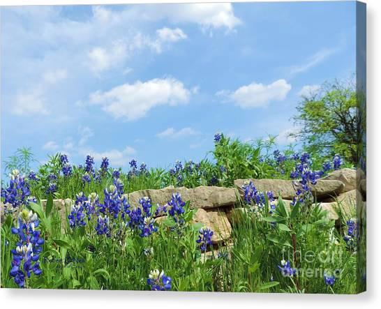 Texas Bluebonnets 08 Canvas Print