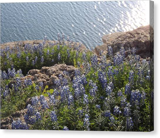 Texas Bluebonnets At Lake Travis Canvas Print by Rebecca Cearley