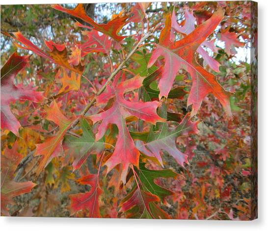 Texas Fall Colors Canvas Print by Rosalie Klidies