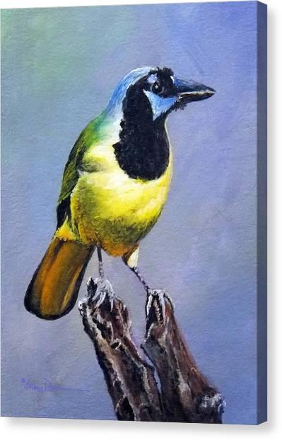 Texas Green Jay Canvas Print