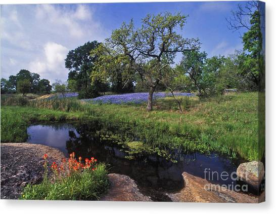 Indian Canvas Print - Texas Hill Country - Fs000056 by Daniel Dempster