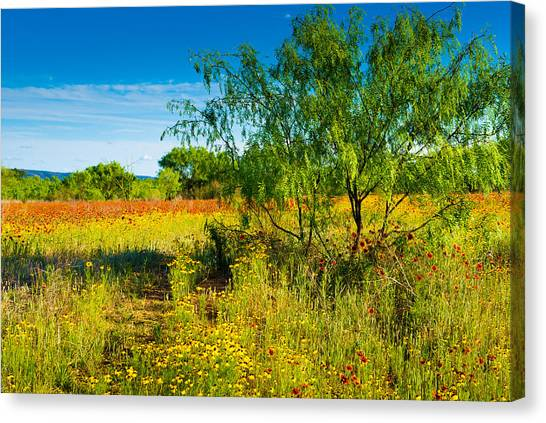 Texas Hill Country Wildflowers Canvas Print