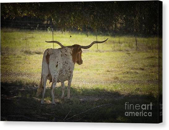 Tyler Texas Canvas Prints | Fine Art America