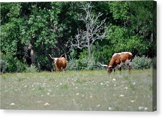 The University Of Texas Canvas Print - Texas Longhorns by Kristina Deane