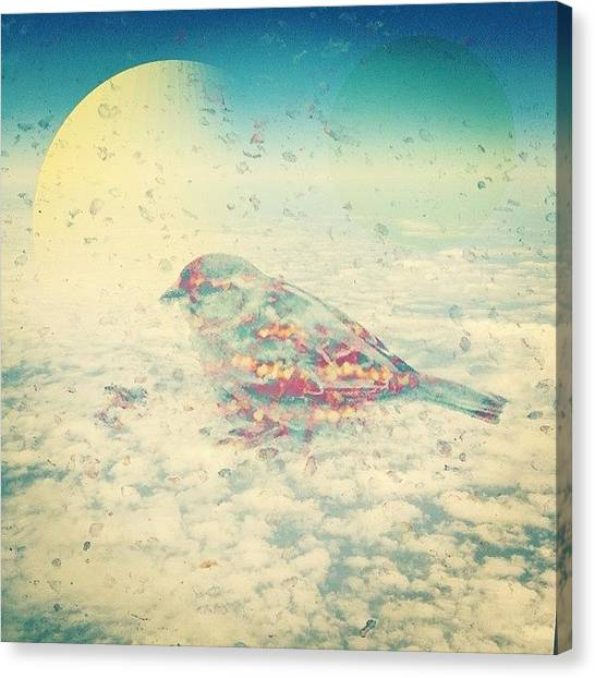 Finches Canvas Print - Little Bird In Texas Sky by Jennifer Martin