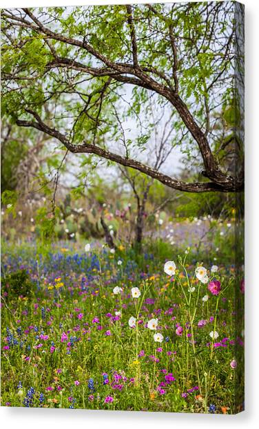 Texas Roadside Wildflowers 732 Canvas Print