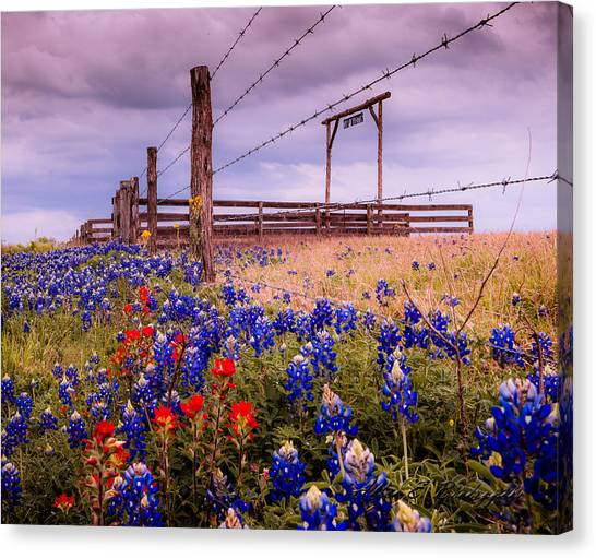 Texas Spring Fence Canvas Print