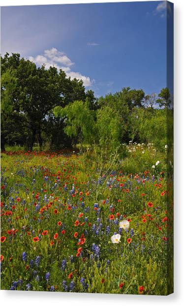 Texas Spring Spectacular Canvas Print