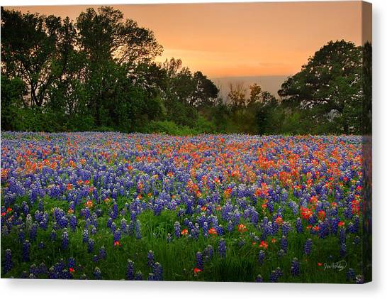 Texas Wildflowers Canvas Print - Texas Sunset - Bluebonnet Landscape Wildflowers by Jon Holiday