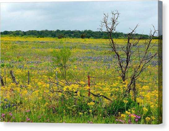 Texas Wildflowers And Mesquite Tree Canvas Print