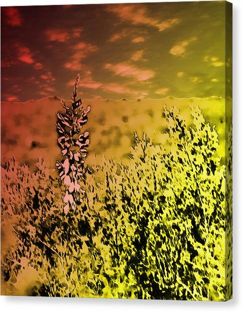 Texas Yucca Flower Canvas Print