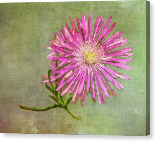 Textured Daisy Canvas Print