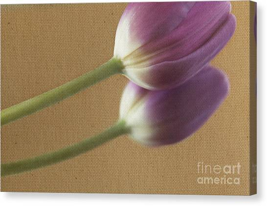 Textured Purpletulip Canvas Print