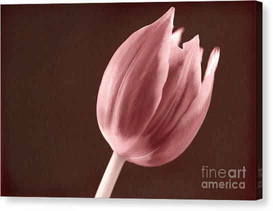 Textured Sepia Tulip Canvas Print