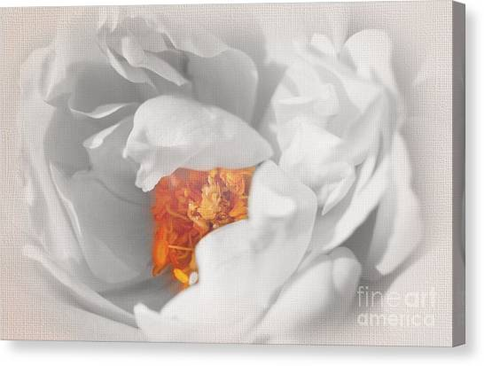 Textured Summer Rose Canvas Print