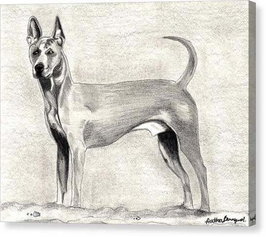 Thai Ridgeback Dog Canvas Print by Olde Time  Mercantile