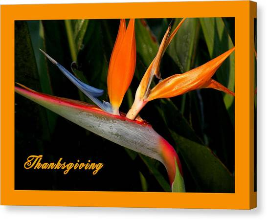 Thanksgiving Card Bird Of Paradise Canvas Print