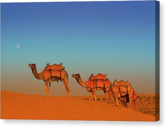 Thar Desert Canvas Print - Thar Desert, Rajasthan India by Piper Mackay