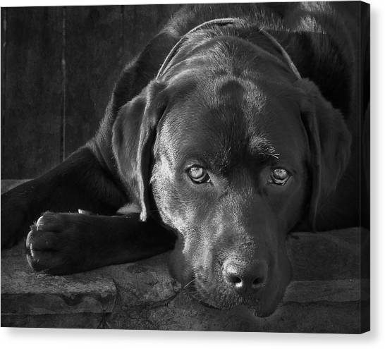 Pitbulls Canvas Print - That Loving Gaze by Larry Marshall