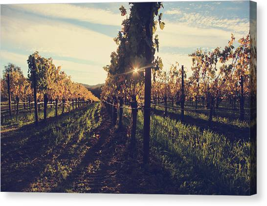 Wine Country Canvas Print - That Special Glow by Laurie Search