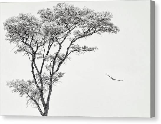 Eagles Canvas Print - The African Eagle by Piet Flour