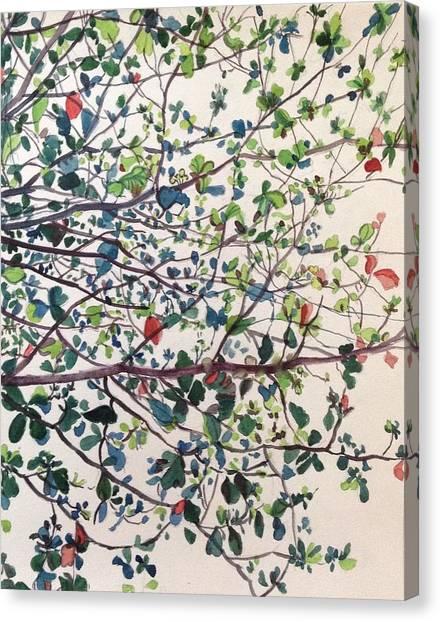 The Almond Tree Canvas Print by Aditi Bhatt