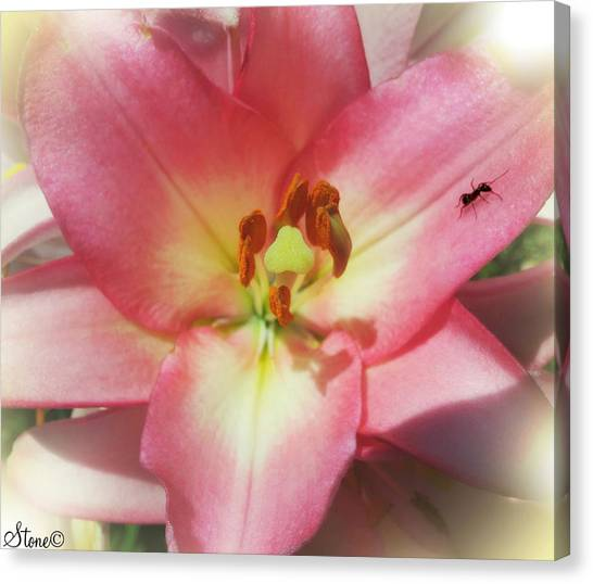 Ants Canvas Print - The Ant by September  Stone