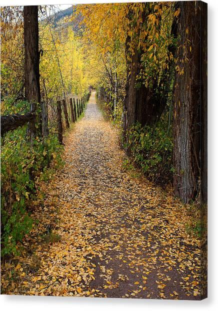 The Aspen Trail Canvas Print