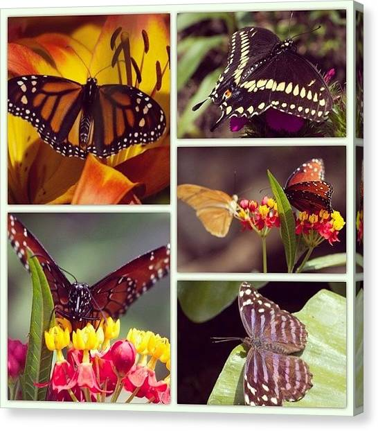 Insects Canvas Print - Butterfly Garden by Heidi Hermes