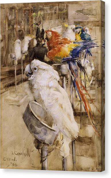 Cockatoos Canvas Print - The Aviary, Clifton, 1888 by Joseph Crawhall
