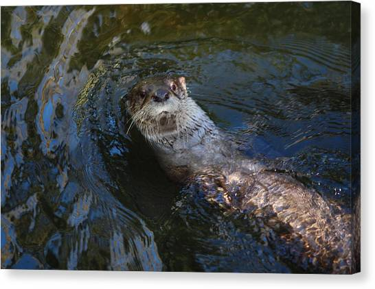 Canvas Print featuring the photograph The Backstroke by Jean Clark