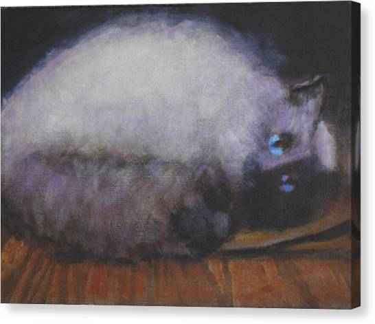 Himalayan Cats Canvas Print - The Bag Lady by David Zimmerman