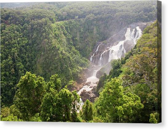 Daintree Rainforest Canvas Print - The Barron Falls by Ashley Cooper