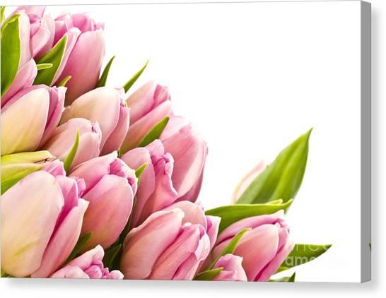 The Beautiful Purple Tulips Canvas Print