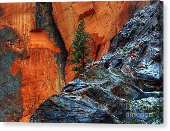 The Beauty Of Sandstone Zion Canvas Print