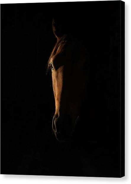 The Beauty Of The Thoroughbred Canvas Print by Sharon Lee Chapman