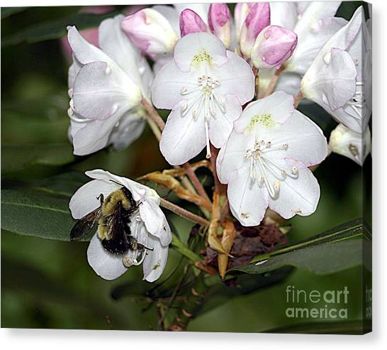 The Bee And The Rhododendron Canvas Print