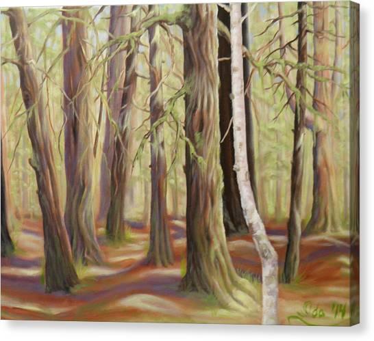 The Birch Tree Canvas Print by Ida Eriksen