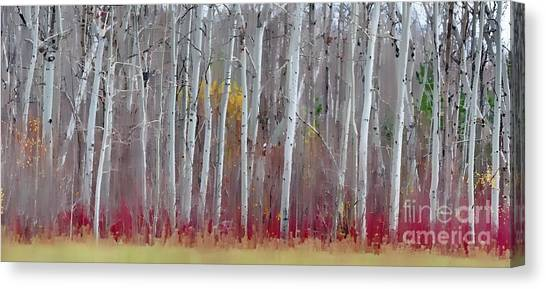 The Birches Panorama  Canvas Print